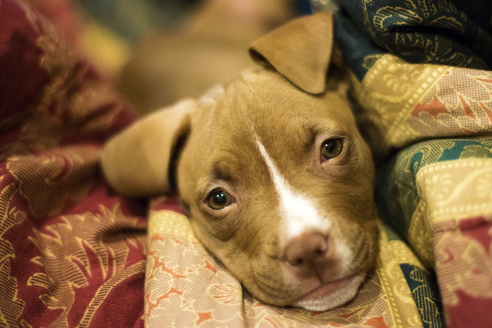 Of a Man on the Street, A Card Game and a Dog: Three Poems by Andrew Shields