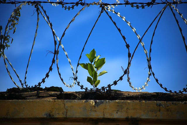 The Fear of Being Caged and Cut off from the Rest of the World — by Sheikh Saqib