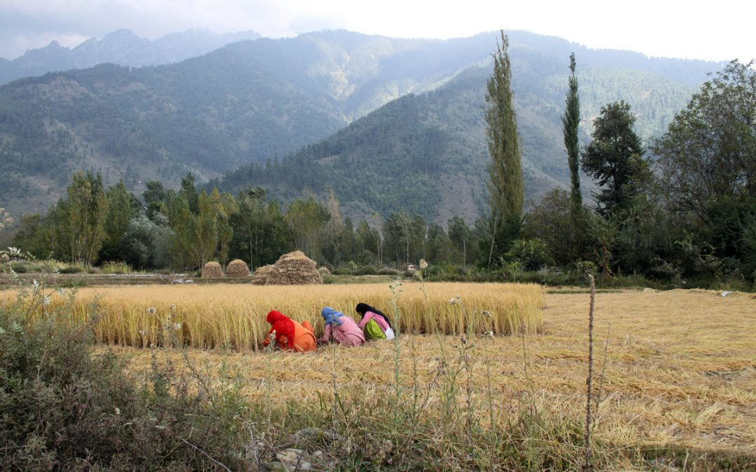Opinion: New Land Laws Put All of Kashmir up for Sale — by Muzamil Jaleel